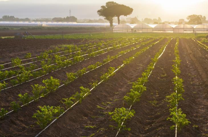 Acque reflue ripulite per irrigare i campi - In a Bottle