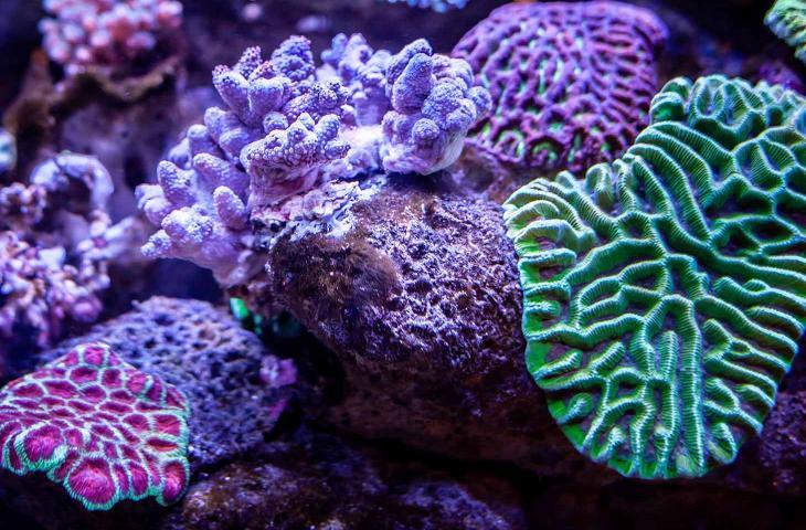 Perché le barriere coralline diventano fluo? - In a Bottle