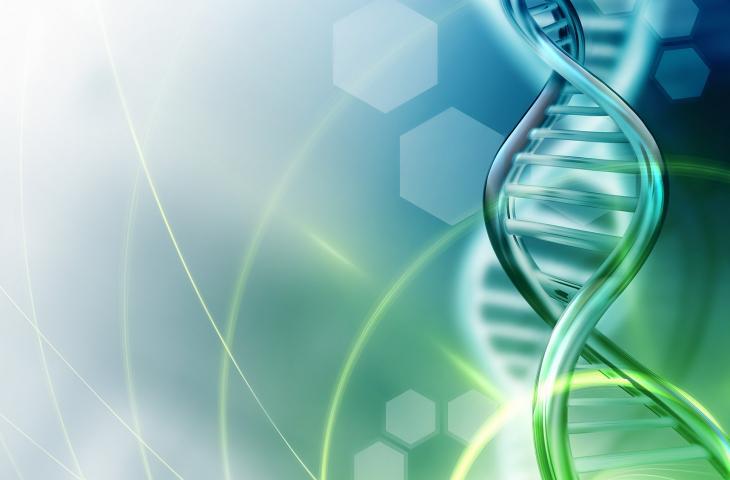 Come si comporta l'acqua intorno al DNA