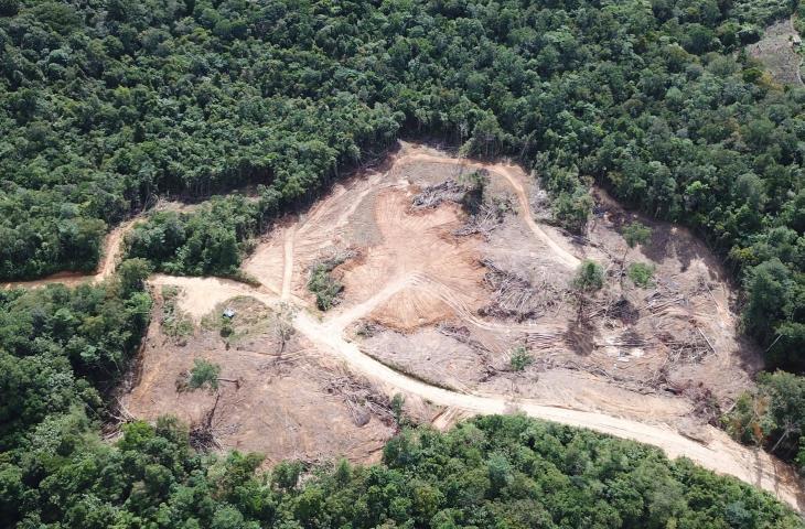 La deforestazione in Africa ostacola l'accesso alla risorsa acqua - In a Bottle