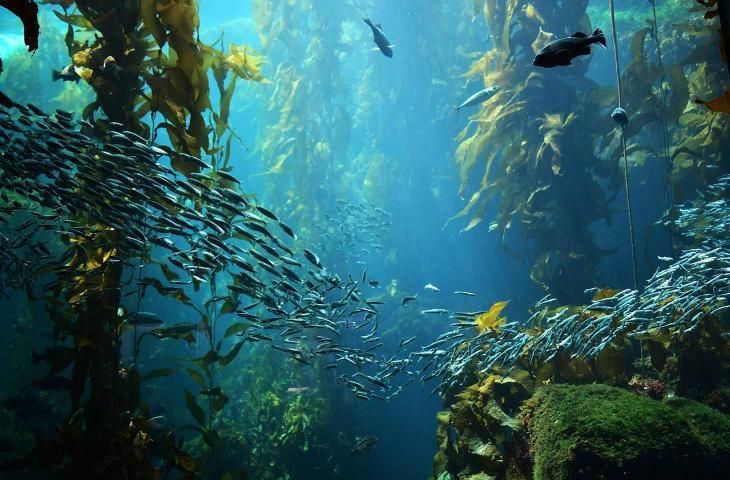 Trovata una foresta sotto il livello del mare risalente al 6000 a.C. - In a Bottle