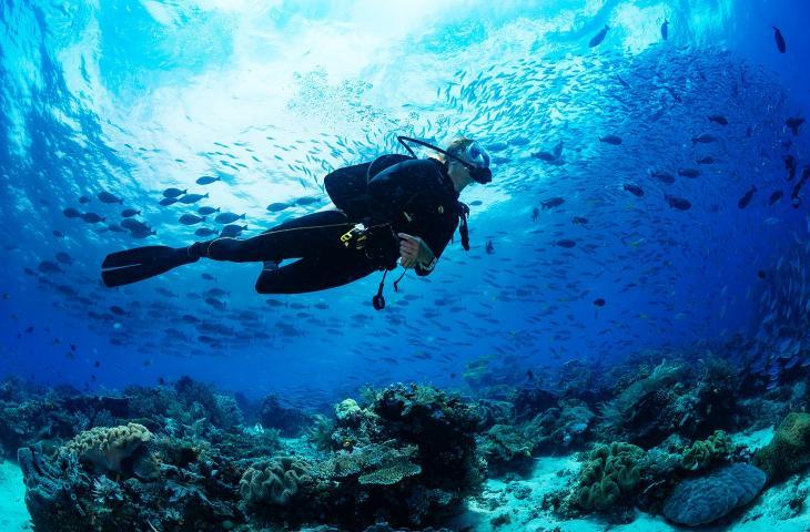 Acquarius Reef Base, l'unico laboratorio sottomarino al mondo che studia la barriera corallina - In a Bottle