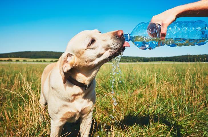 Come e quando idratare i cani in estate - In a Bottle