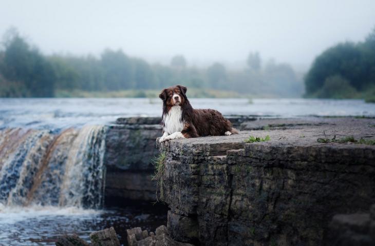 Ora l'inquinamento delle acque lo fiutano i cani