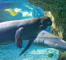 """Acquario di Genova, un """"tuffo"""" virtuale tra squali e pesci tropicali - In a Bottle"""