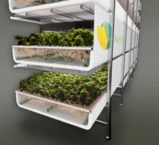 La coltivazione aeroponica riduce del 90% il consumo di acqua