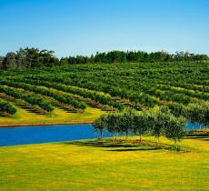 Anil Jain e l'ottimizzazione delle risorse idriche in agricoltura – In a Bottle