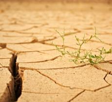 Assorbimento Acqua del Terreno Come Impatta il Cambiamento Climatico – In a Bottle