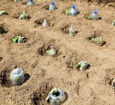 Riutilizzo della plastica: le tecniche di World Neighpours – In a Bottle