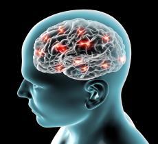 Scoperta una proteina nel cervello che attiva lo stimolo della sete