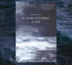 """""""Il mare intorno a noi"""", la biografia del mare della scrittrice ambientalista Rachel Carson - In a Bottle"""