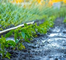L'acqua in agricoltura: elemento fondamentale da salvaguardare