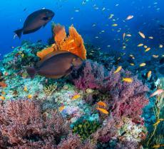 Museo Barriera Corallina Australia Opere Sommerse dall'Acqua – In a Bottle