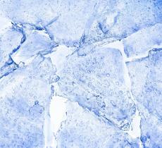 """Prodotta nuova forma di ghiaccio """"XVII"""""""