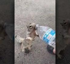 Scoiattolo assetato chiede acqua ad un bambino, il video è virale