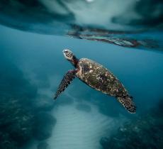 Sea Shepherd: compie 40 anni il movimento al servizio del mare – In a Bottle