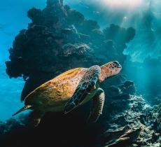 Tartarughe marine, cigni e delfini: gli animali tornano a popolare le città - In a Bottle