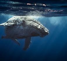 In Norvegia verrà costruito un museo dove poter vedere le balene nuotare libere - In a Bottle