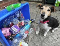 Dal Regno Unito arriva Molly, il cane amante del riciclo