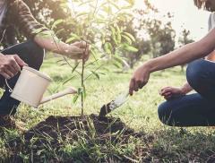 Dall'Inghilterra una start-up che insegna a coltivare piante con acqua di mare - In a Bottle