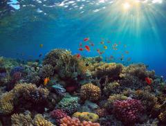 Che cosa sono i coralli? - In a Bottle