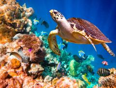 Il Metabolismo degli Animali Marini e l'Importanza della Fauna  – In a Bottle