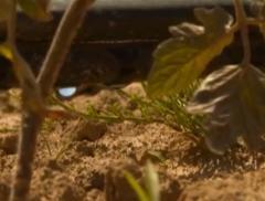 Il progetto italiano per risparmiare acqua in agricoltura
