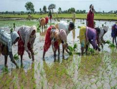In India gli agricoltori vengono educati con il digitale_alt tag