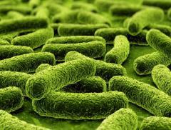 L'Italia coordina progetto Ue per «mappatura genetica» di vegetali_alt tag