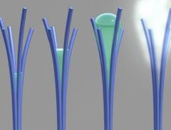 Nanotubi e raccolta di acqua: la nuova scoperta alt_tag