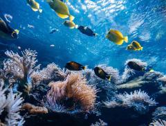 Reefsuites Camere d'Albergo Sottomarine in Australia – In a Bottle