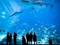 Scopri gli 8 acquari più belli del mondo