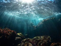 Qual è lo stato di salute degli oceani? - In a Bottle