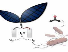 Foglia bionica per creare un combustibile ad acqua