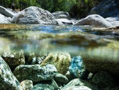Un Nuovo Guardiano dell'Acqua: Nestlè Waters– In a Bottle