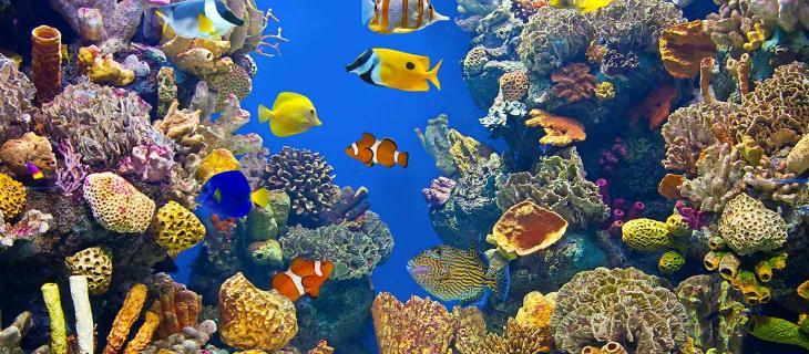 Biodiversità marina, le 5 specie più minacciate - In a Bottle