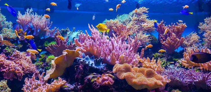 Larvalbot: il Robot Creato per Salvare le Barriere Coralline degli Oceani – In a Bottle