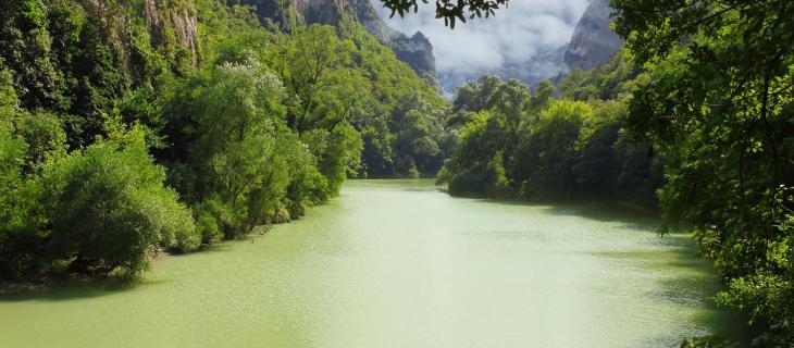 In Brasile l'umidità dell'aria amazzonica viene trasformata in bottiglie d'acqua - In a Bottle