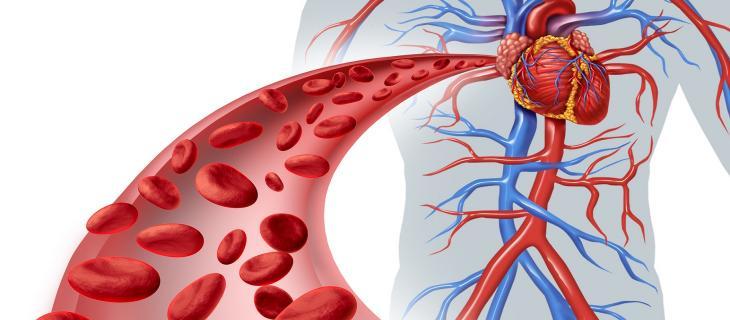 Una corretta idratazione favorisce la circolazione sanguigna