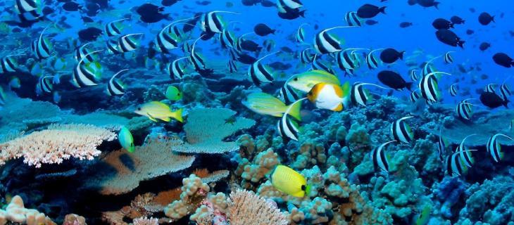 Creature e vita sott'acqua: un'app te le fa scoprire alt_tag