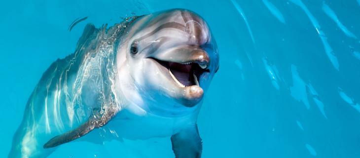 La Toscana ama i delfini: creata un'area per salvaguardare questa specie marina - In a Bottle
