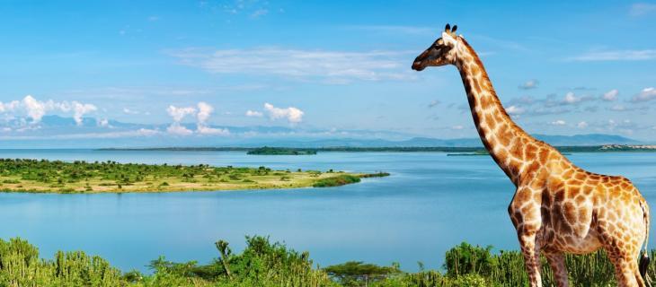 Ripresa idrica in Uganda: i primi segnali - In a Bottle