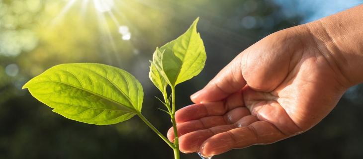 Risparmio idrico: l'esempio del Sudafrica