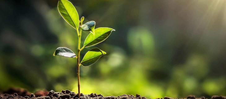 SDG Action Manager, la piattaforma Onu per la sostenibilità - In a Bottle